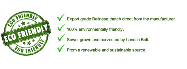 Export grade Bali thatch direct from the manufacturer. Eco friendly Balinese thatch, sown grown and harvested by hand in Bali from a renewable and sustainable resource